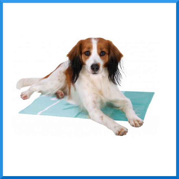 Le nostre news il pelosauro specializzati nella - Tappetino riscaldante per cani ...
